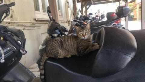 İstanbul Motorcuları