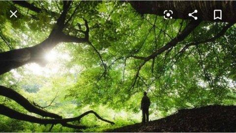 Doğada Yaşam Bursa